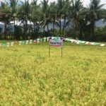 This rice-farming town is set to have a more bountiful summer harvest