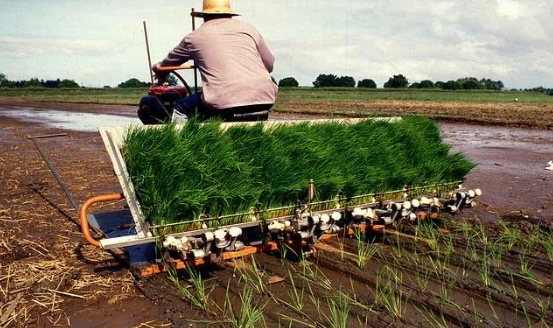 Technology Forum Pushes For More Efficient Hybrid Rice Farming In Ph