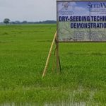SeedWorks holds demo of two rice-seeding techniques in Mindanao